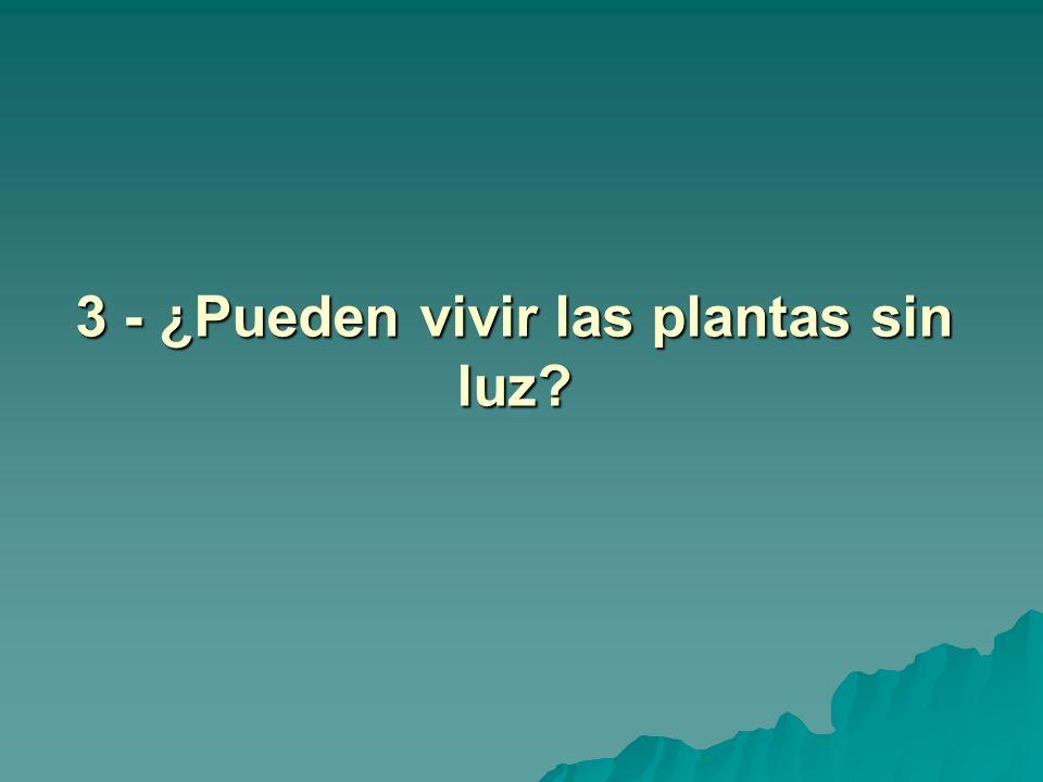 3 - ¿Pueden vivir las plantas sin luz