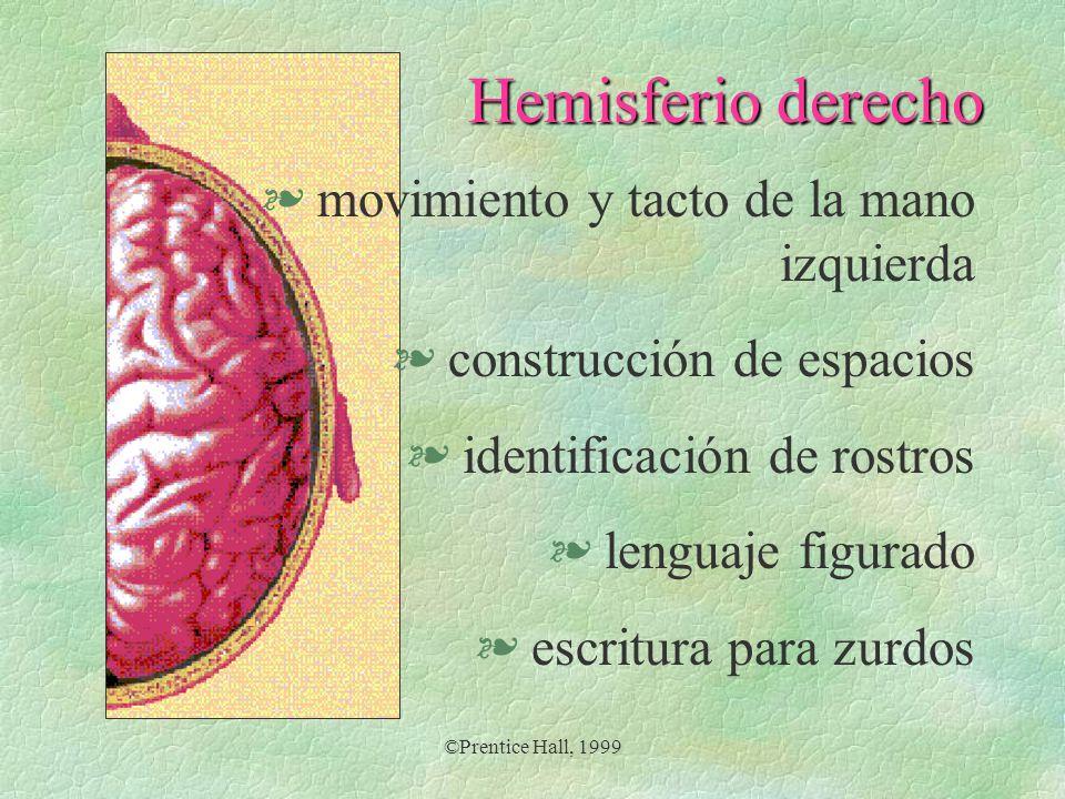 Hemisferio derecho movimiento y tacto de la mano izquierda