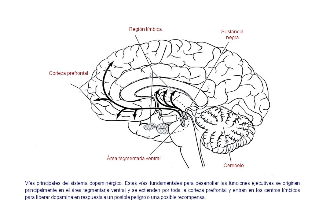 Área tegmentaria ventral