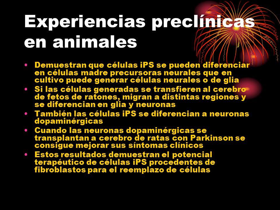 Experiencias preclínicas en animales