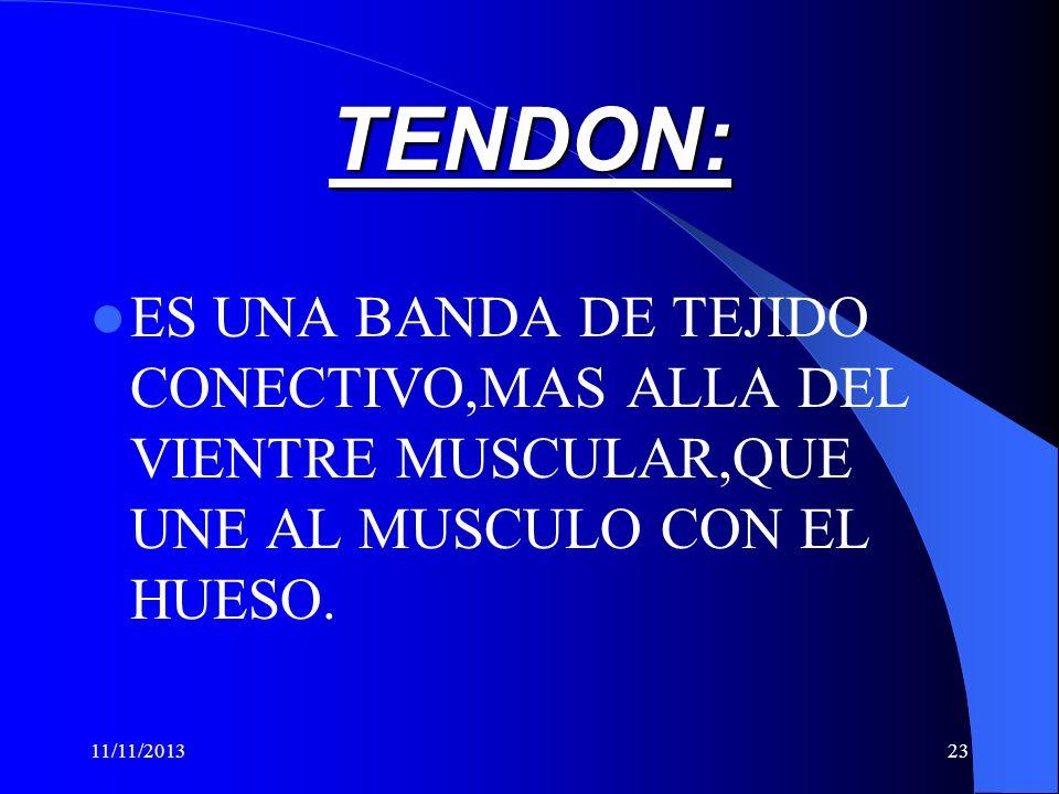 TENDON:ES UNA BANDA DE TEJIDO CONECTIVO,MAS ALLA DEL VIENTRE MUSCULAR,QUE UNE AL MUSCULO CON EL HUESO.