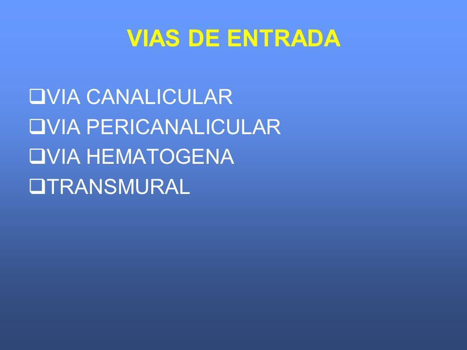 VIAS DE ENTRADA VIA CANALICULAR VIA PERICANALICULAR VIA HEMATOGENA