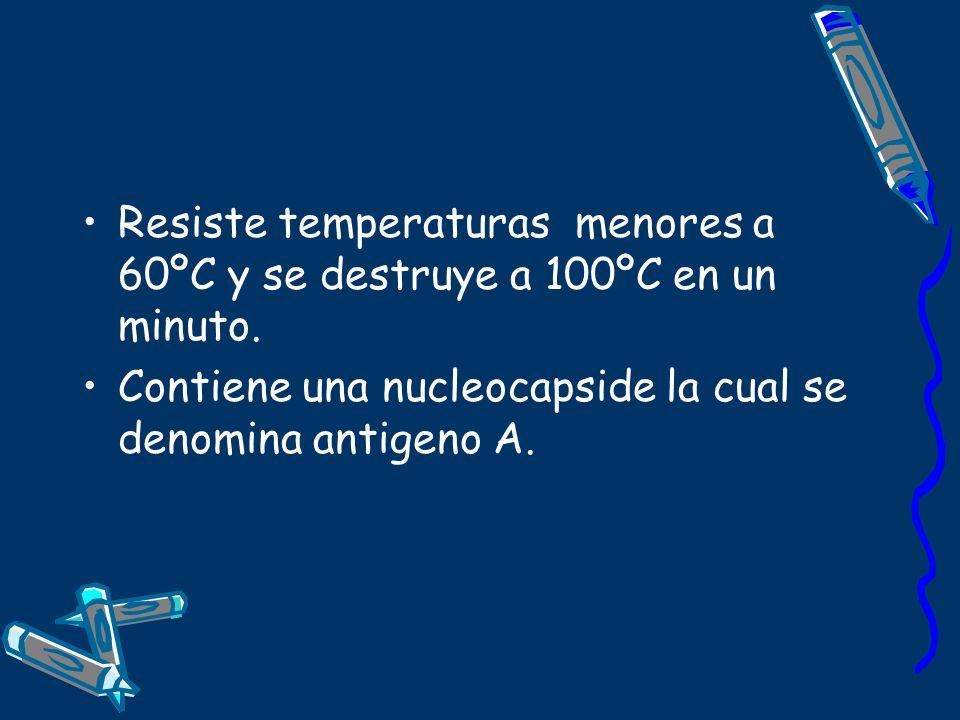 Resiste temperaturas menores a 60ºC y se destruye a 100ºC en un minuto.