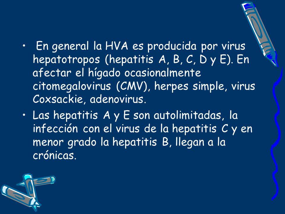 En general la HVA es producida por virus hepatotropos (hepatitis A, B, C, D y E). En afectar el hígado ocasionalmente citomegalovirus (CMV), herpes simple, virus Coxsackie, adenovirus.