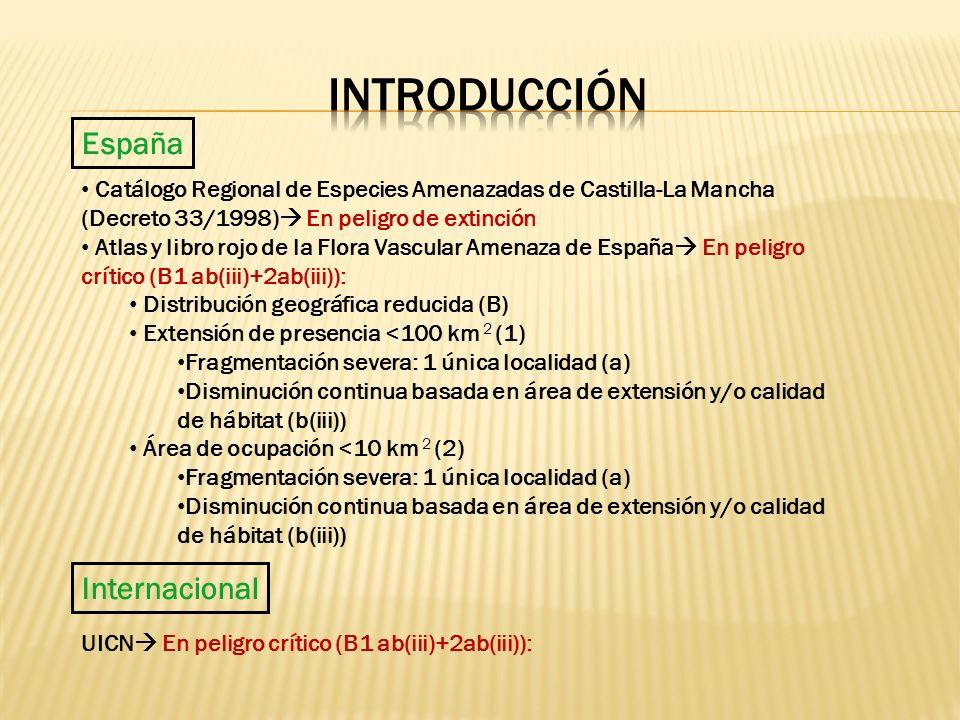 Introducción España Internacional