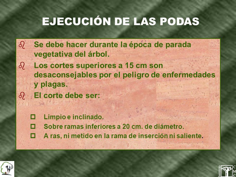 EJECUCIÓN DE LAS PODAS Se debe hacer durante la época de parada vegetativa del árbol.