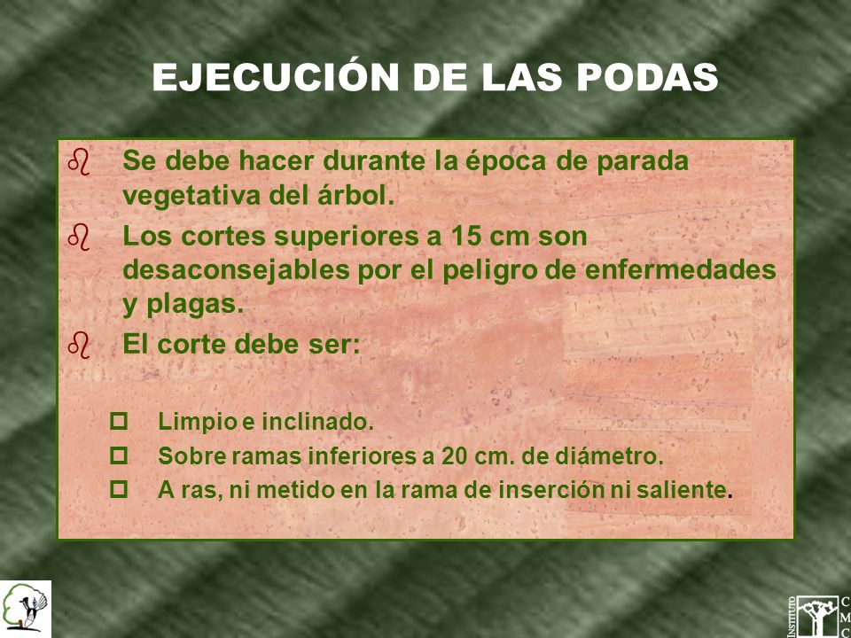 EJECUCIÓN DE LAS PODASSe debe hacer durante la época de parada vegetativa del árbol.