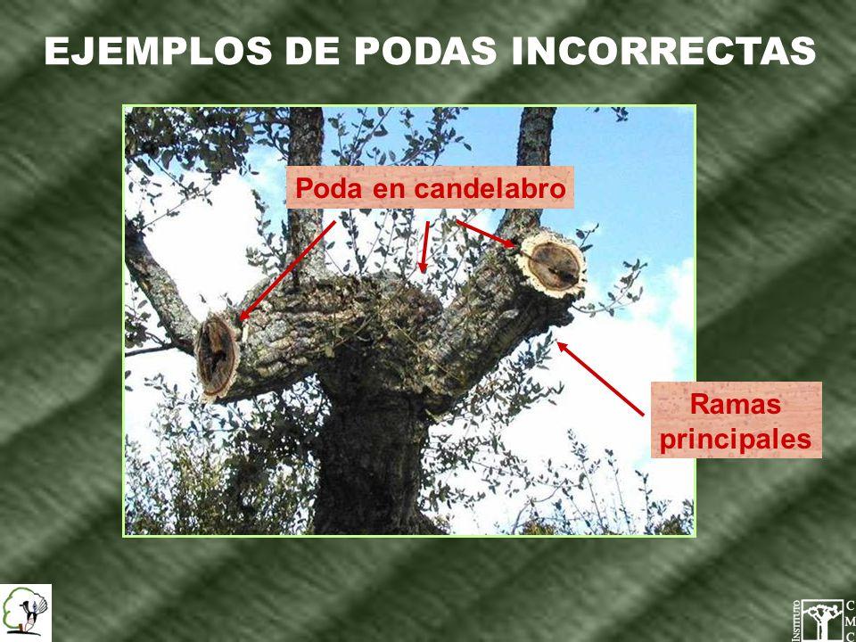 EJEMPLOS DE PODAS INCORRECTAS