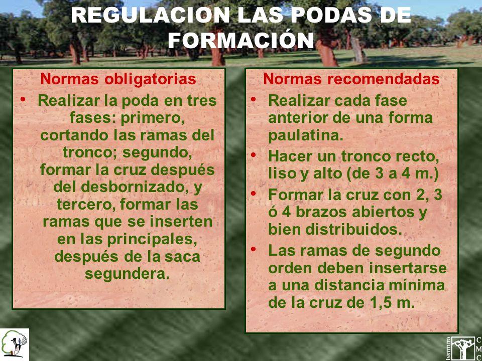 REGULACION LAS PODAS DE FORMACIÓN