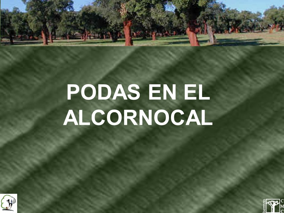 PODAS EN EL ALCORNOCAL