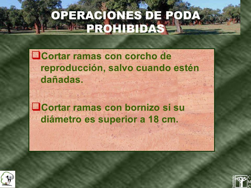 OPERACIONES DE PODA PROHIBIDAS
