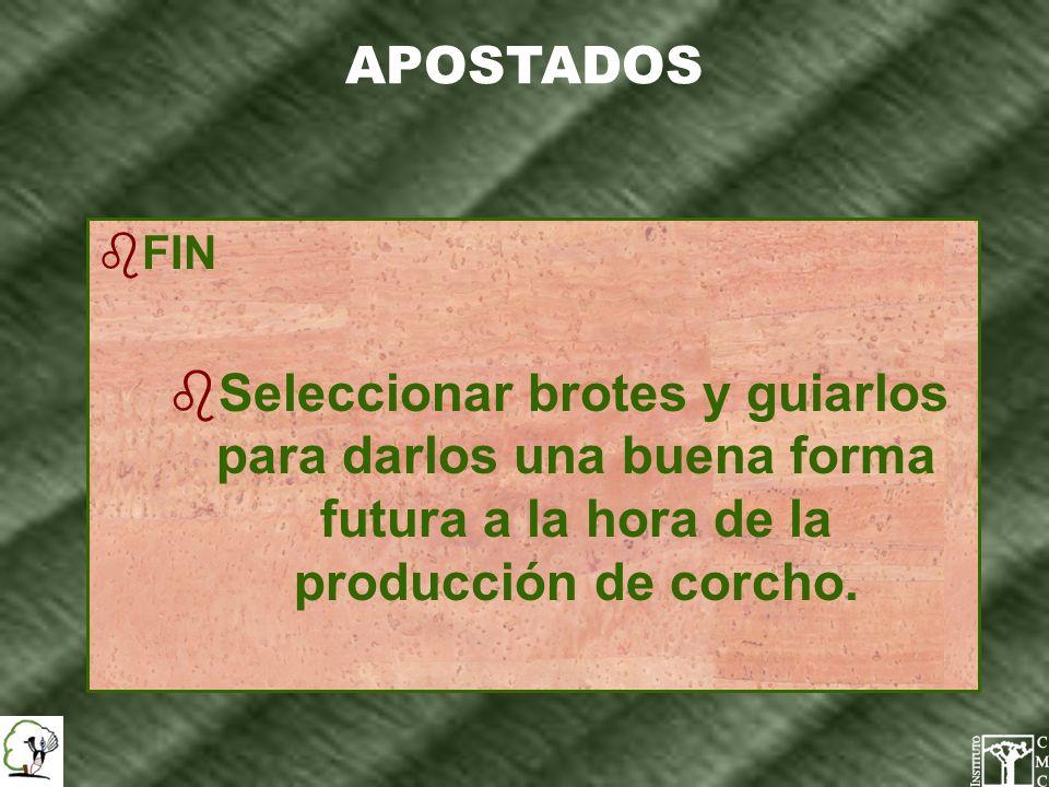 APOSTADOS FIN.