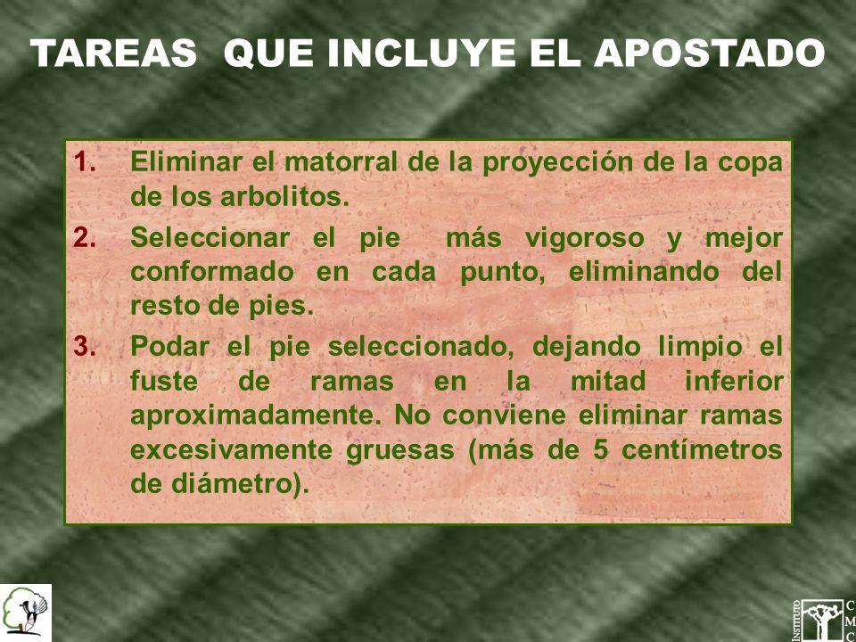TAREAS QUE INCLUYE EL APOSTADO