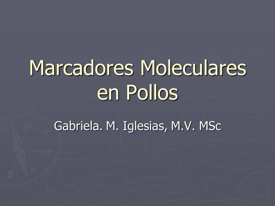 Marcadores Moleculares en Pollos