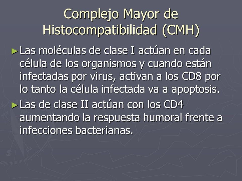 Complejo Mayor de Histocompatibilidad (CMH)