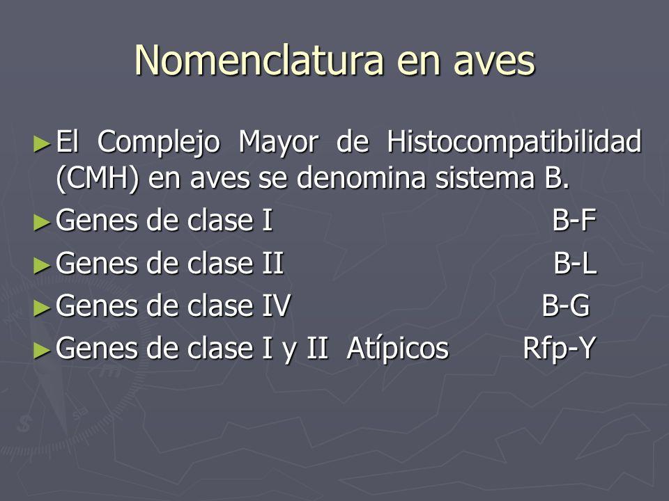 Nomenclatura en aves El Complejo Mayor de Histocompatibilidad (CMH) en aves se denomina sistema B. Genes de clase I B-F.