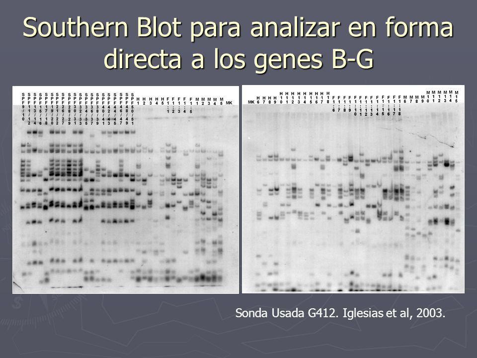 Southern Blot para analizar en forma directa a los genes B-G