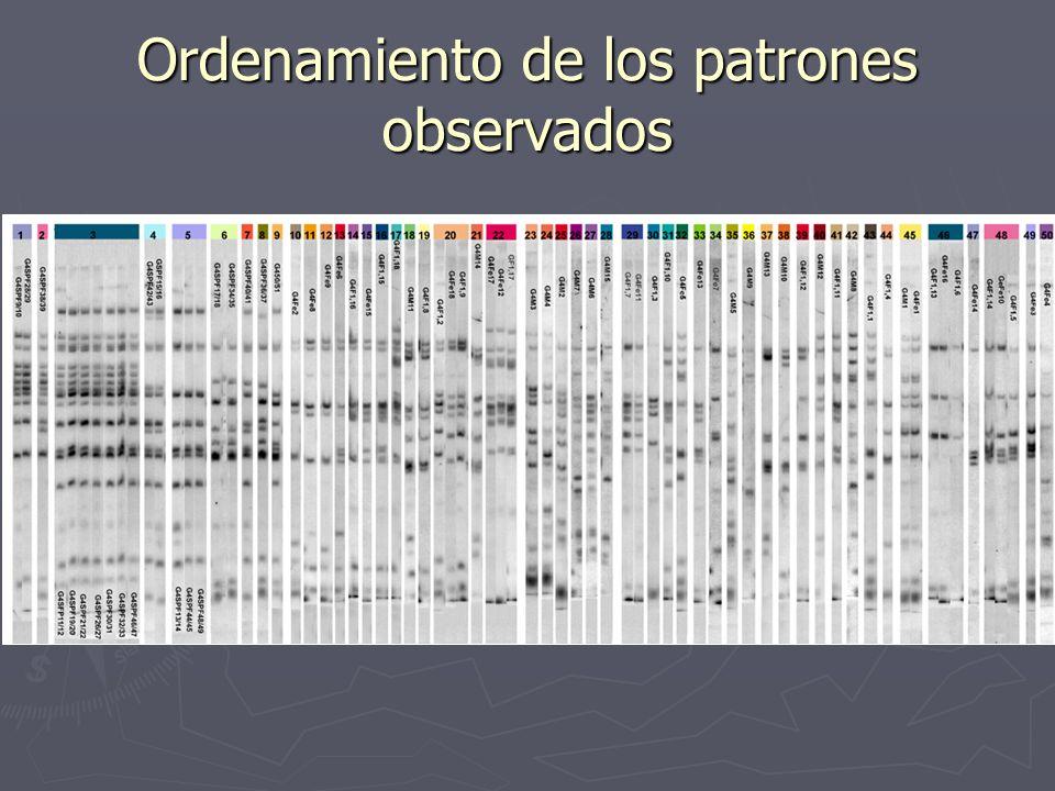 Ordenamiento de los patrones observados