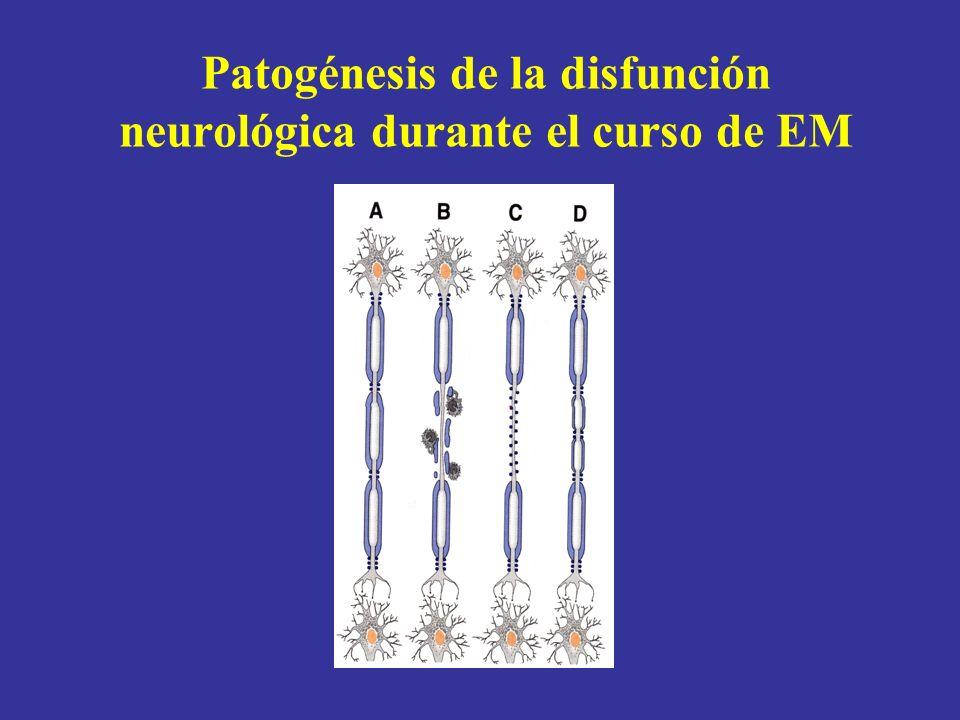 Patogénesis de la disfunción neurológica durante el curso de EM