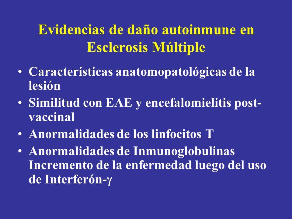 Evidencias de daño autoinmune en Esclerosis Múltiple