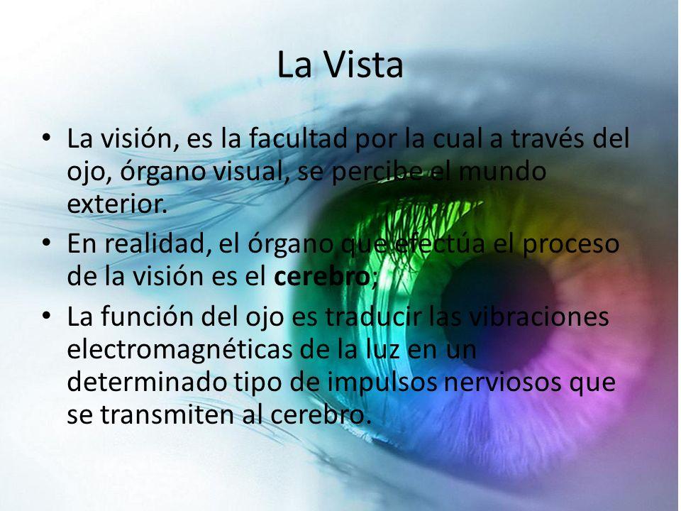 La Vista La visión, es la facultad por la cual a través del ojo, órgano visual, se percibe el mundo exterior.