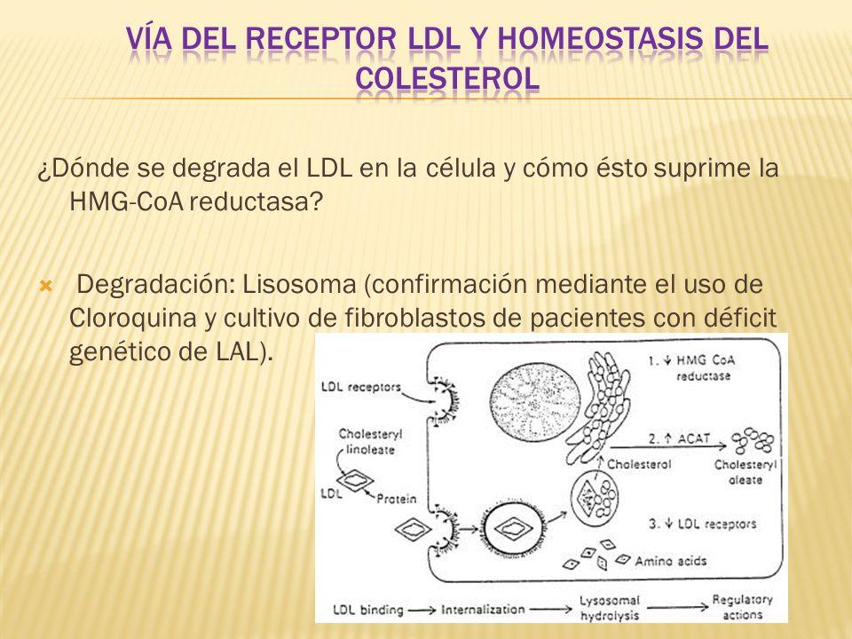 Vía del receptor ldl y homeostasis del colesterol