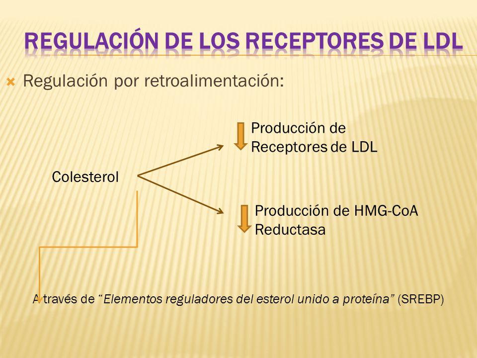 REGULACIÓN DE LOS RECEPTORES DE LDL