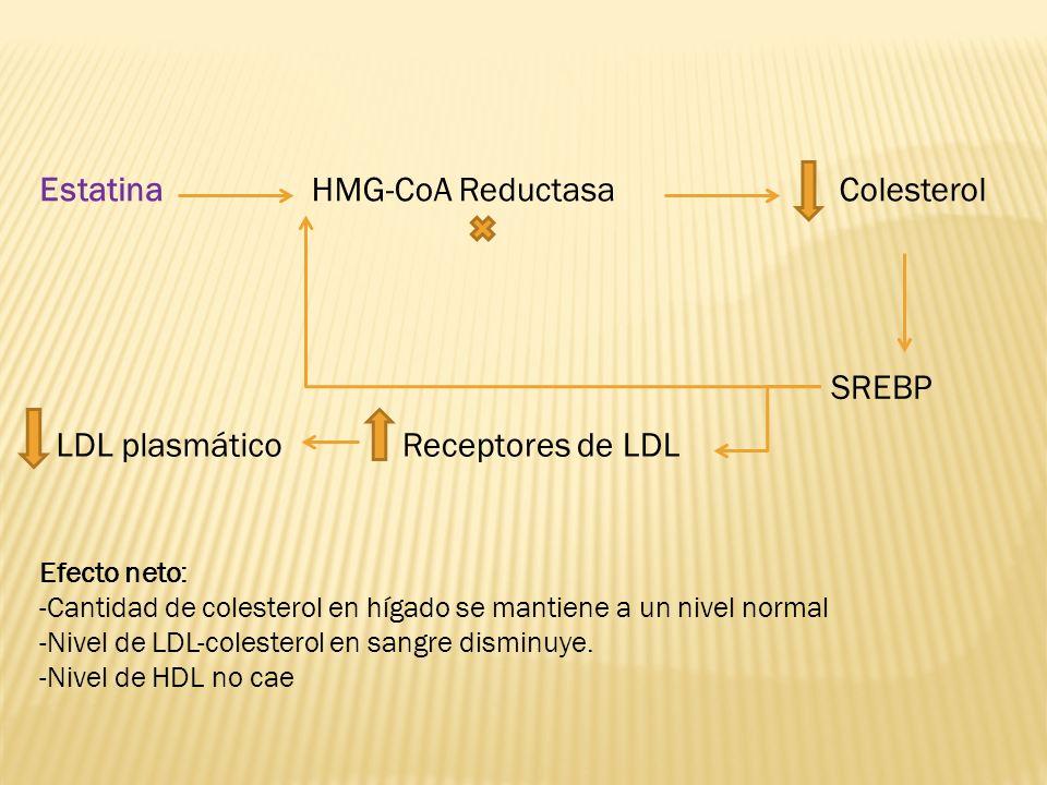 Estatina HMG-CoA Reductasa Colesterol SREBP LDL plasmático