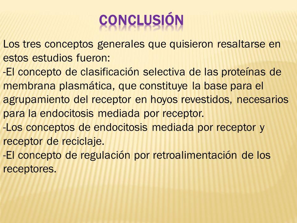 conclusión Los tres conceptos generales que quisieron resaltarse en estos estudios fueron: