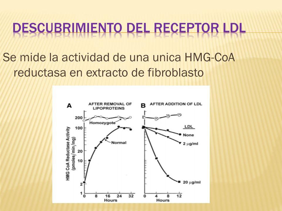 Descubrimiento del receptor ldl