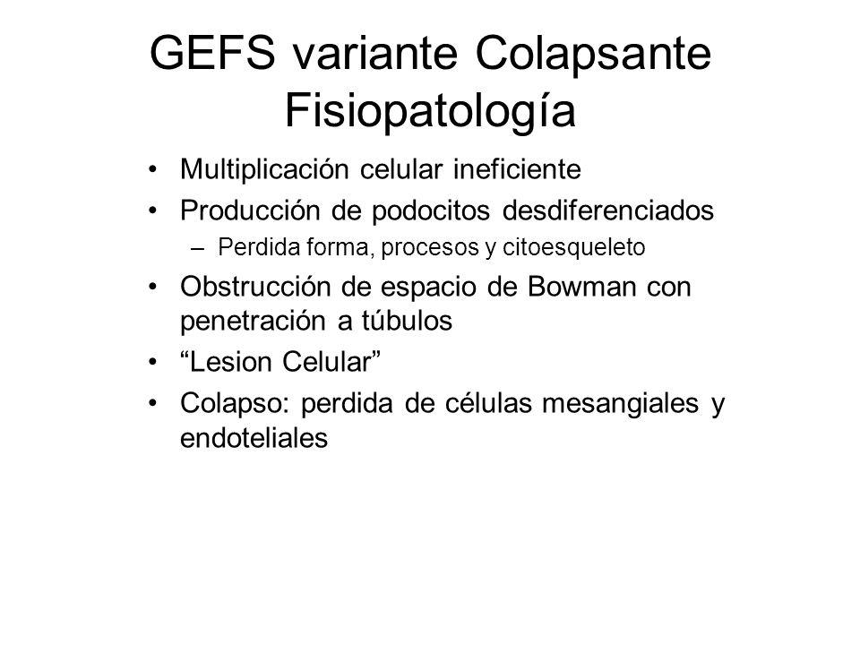 GEFS variante Colapsante Fisiopatología