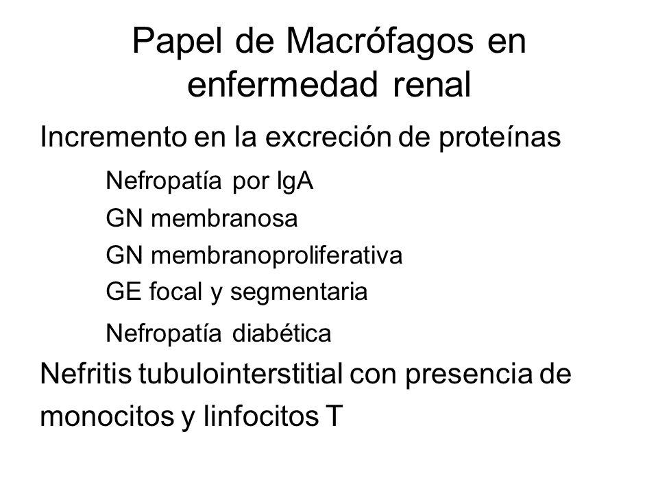 Papel de Macrófagos en enfermedad renal