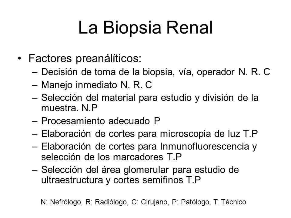 La Biopsia Renal Factores preanálíticos: