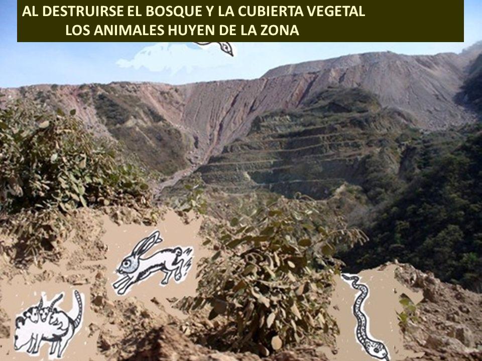 . AL DESTRUIRSE EL BOSQUE Y LA CUBIERTA VEGETAL