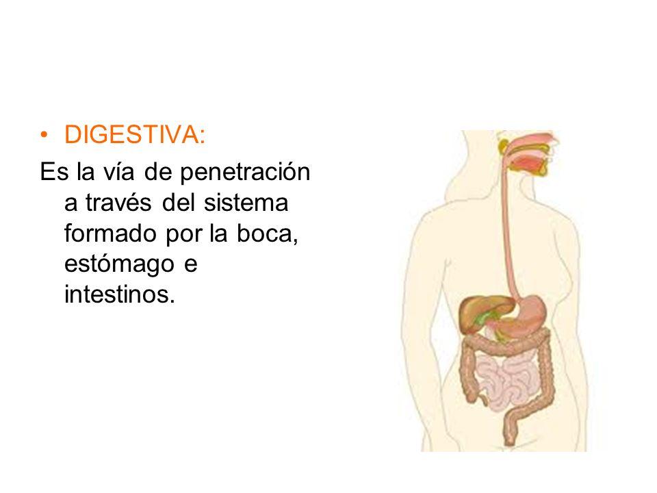 DIGESTIVA: Es la vía de penetración a través del sistema formado por la boca, estómago e intestinos.