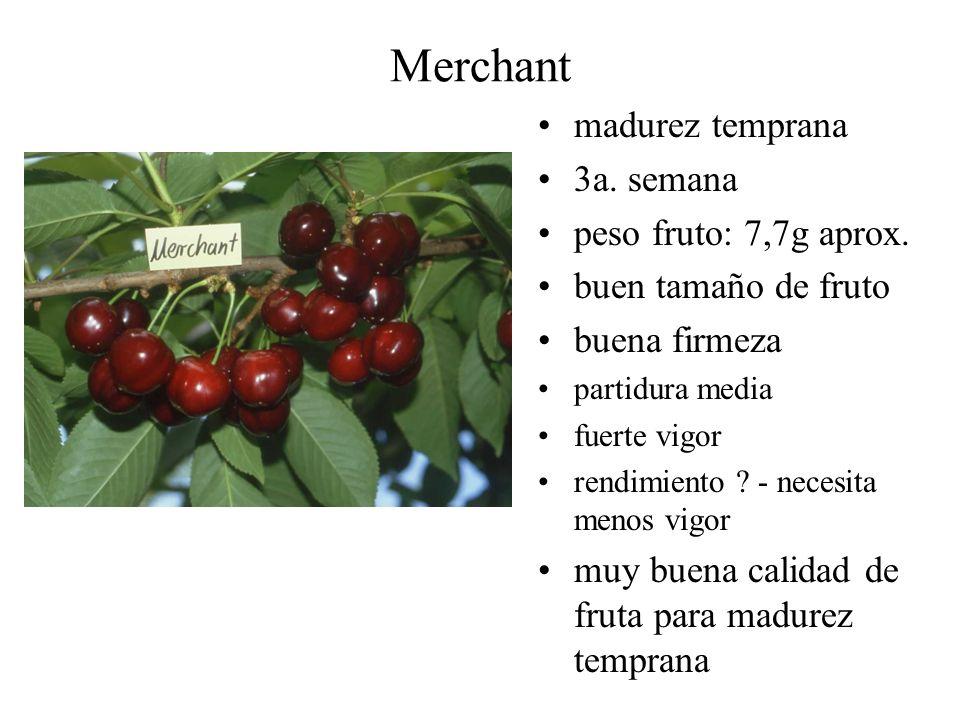Merchant madurez temprana 3a. semana peso fruto: 7,7g aprox.