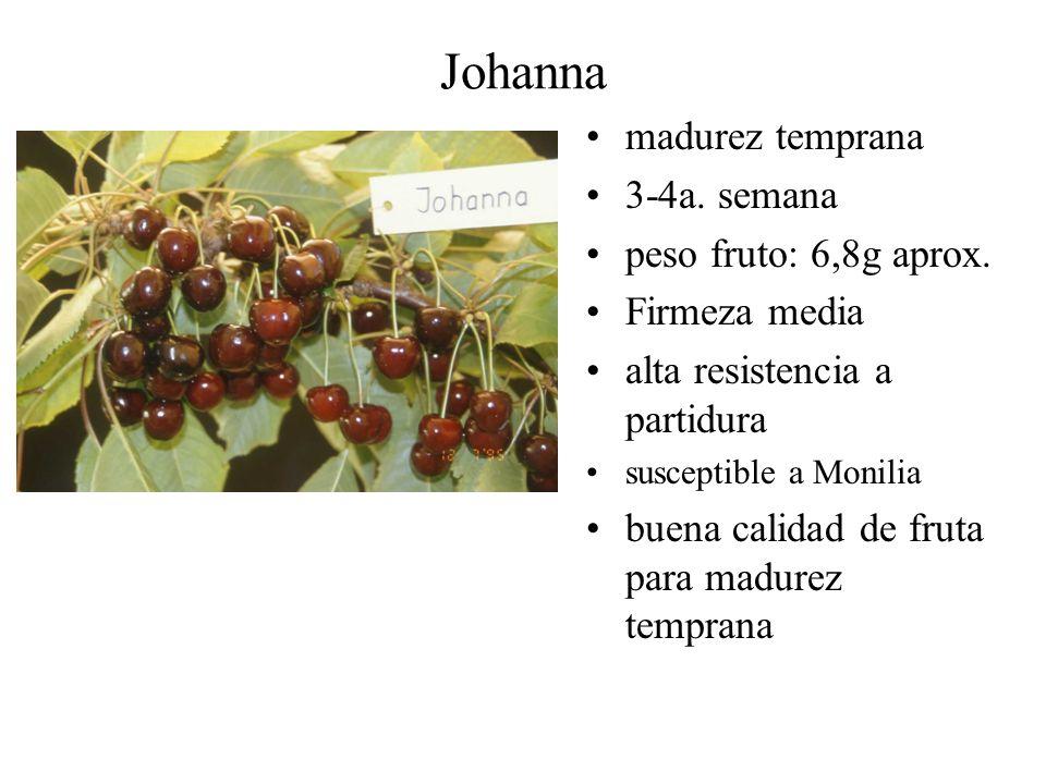 Johanna madurez temprana 3-4a. semana peso fruto: 6,8g aprox.