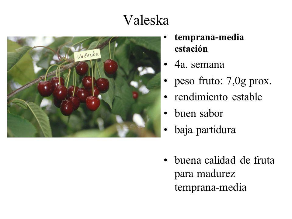 Valeska 4a. semana peso fruto: 7,0g prox. rendimiento estable