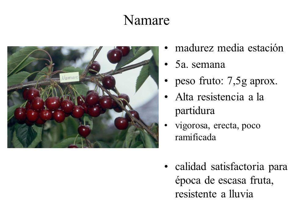 Namare madurez media estación 5a. semana peso fruto: 7,5g aprox.