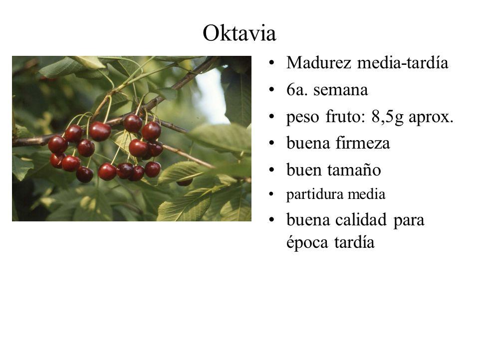 Oktavia Madurez media-tardía 6a. semana peso fruto: 8,5g aprox.