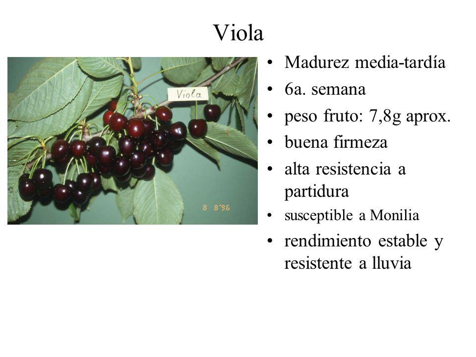 Viola Madurez media-tardía 6a. semana peso fruto: 7,8g aprox.