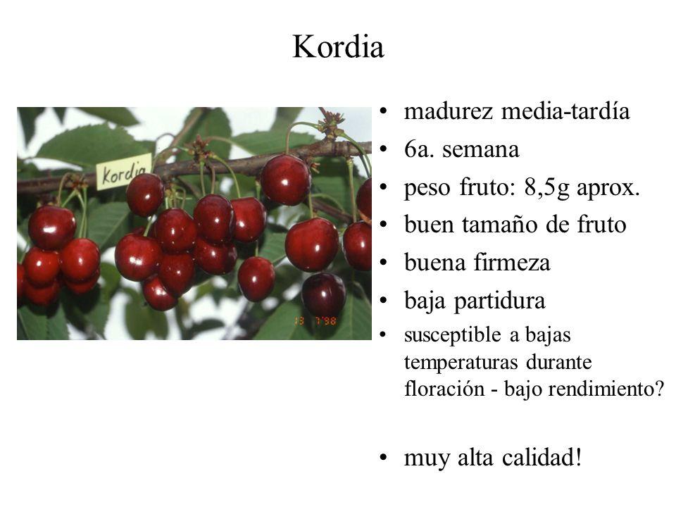 Kordia madurez media-tardía 6a. semana peso fruto: 8,5g aprox.