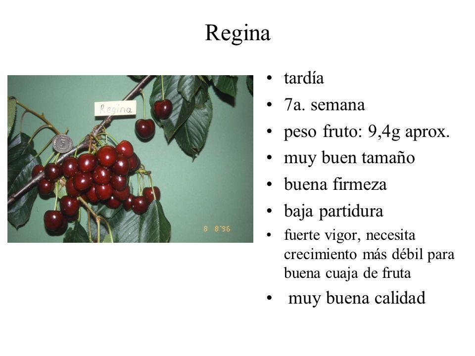 Regina tardía 7a. semana peso fruto: 9,4g aprox. muy buen tamaño