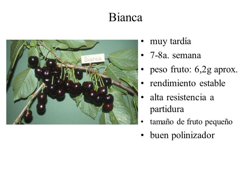Bianca muy tardía 7-8a. semana peso fruto: 6,2g aprox.