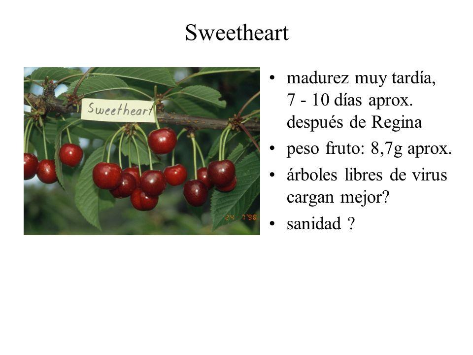 Sweetheart madurez muy tardía, 7 - 10 días aprox. después de Regina