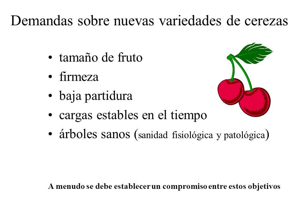 Demandas sobre nuevas variedades de cerezas
