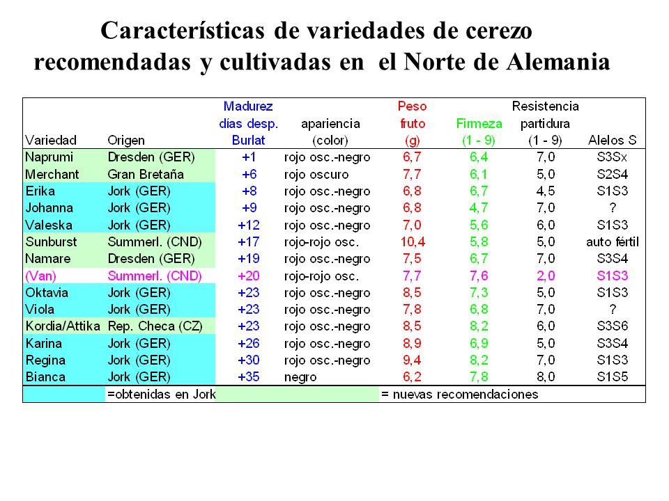 Características de variedades de cerezo