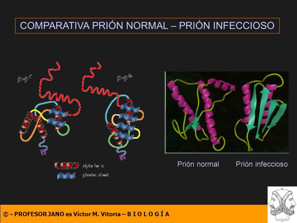 COMPARATIVA PRIÓN NORMAL – PRIÓN INFECCIOSO