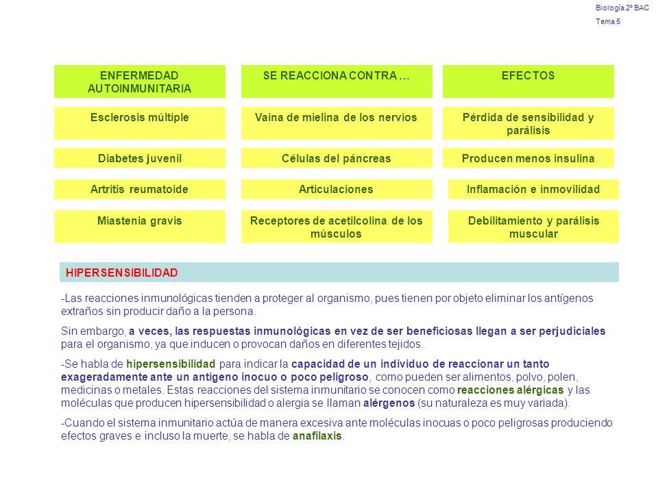 ENFERMEDAD AUTOINMUNITARIA SE REACCIONA CONTRA … EFECTOS