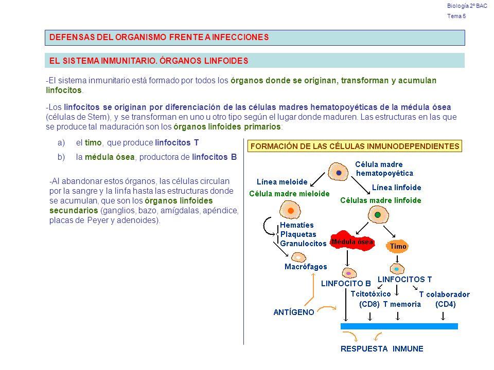 DEFENSAS DEL ORGANISMO FRENTE A INFECCIONES